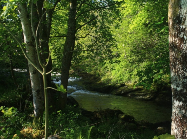 Image of River Tryweryn at low water, more of a paddle than a wild swim!